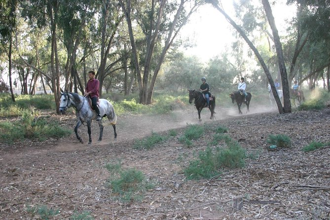 Agadir horse riding with Hotel Transfers