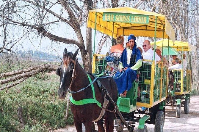 Agadir Horse-Drawn Carriage Ride & La Medina d'Agadir Visit with Hotel Transfers