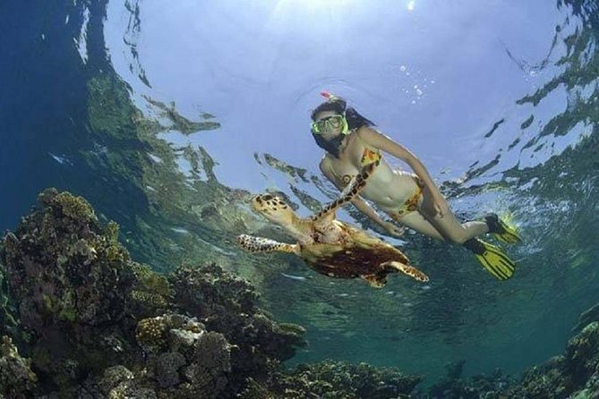 Private tour to Abu Dabbab Dugong Bay - Snorkeling tour from Marsa Alam