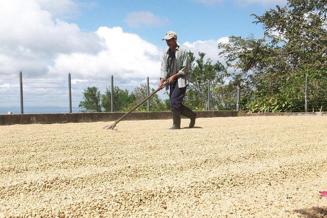 Café Las Flores Coffee Plantation Tour vanuit Managua