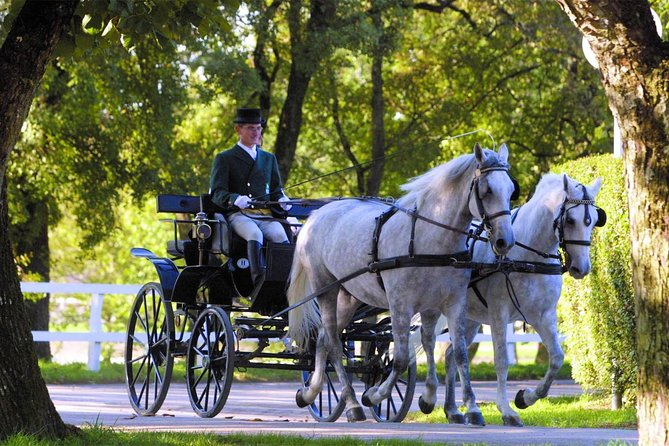 Private Experience: Lipica Stud Farm- The Cradle of Lipizzaner- from Koper