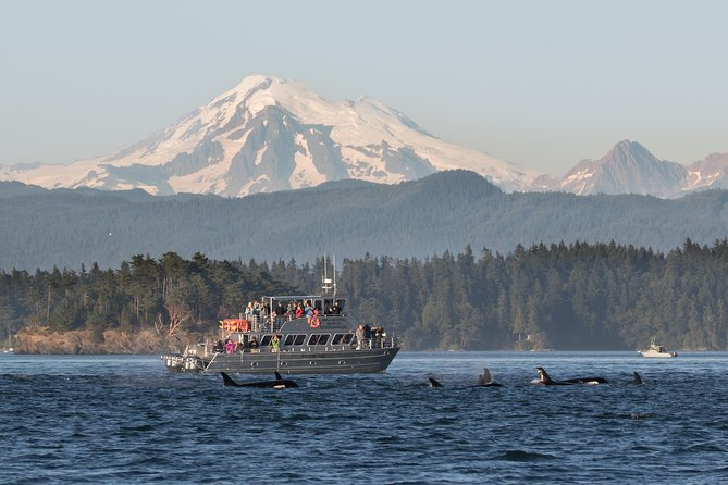 Guaranteed Whale Watching Tour