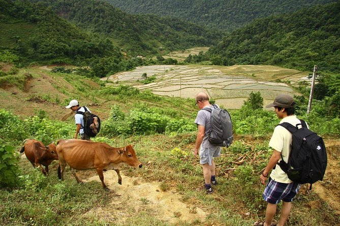 Private 3-Day Trekking Tour: Pu Luong Nature Reserve Including Homestay from Hanoi