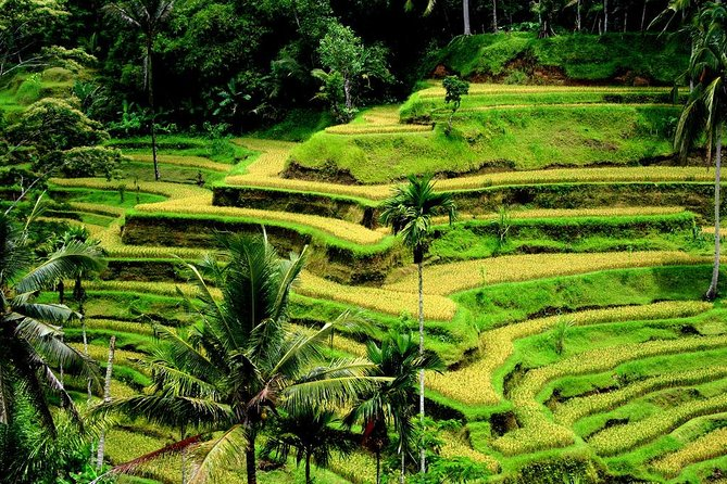 Full-day Private Shore Excursion: Best of Bali Island