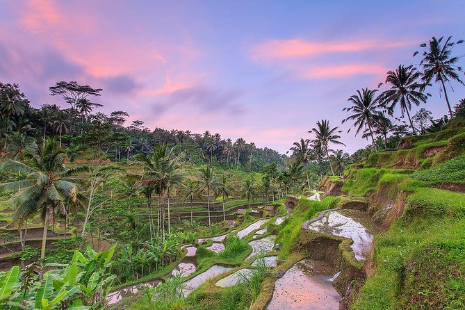 Private Ubud Full-Day Tours