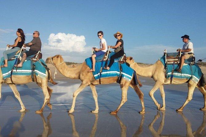 2heures de promenade à dos de chameau