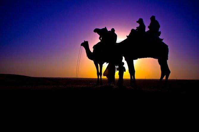 Promenades à dos de chameau au coucher du soleil à Agadir avec transferts
