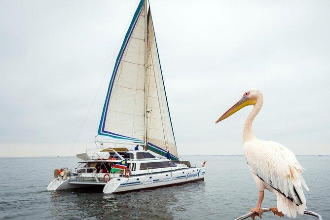 Tägliche Segeltour vom Strand von Walvis Bay zu den Marine Big5