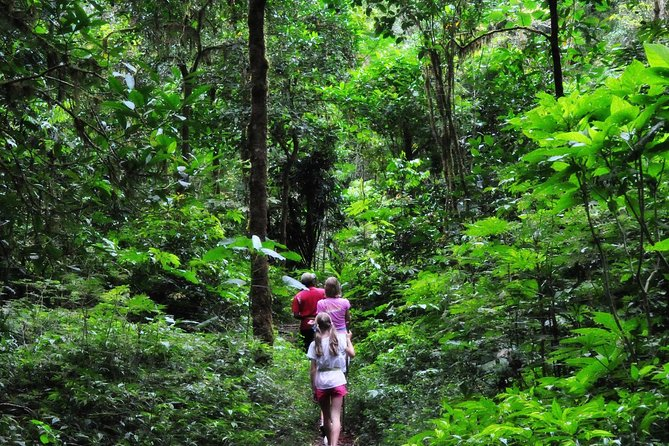 Ubud Full-Day Tour And Countryside Trekking