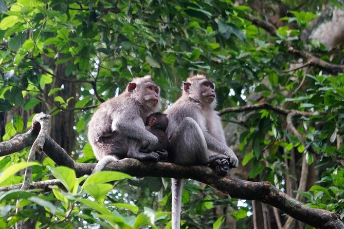 Private Tour: Monkey Forest Ubud,Coffee plantation and Tegenungan Waterfall