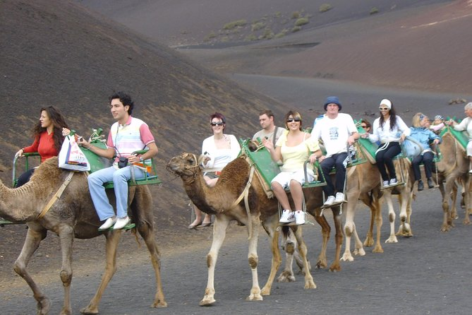 safari-dos-chameau-lanzarote-parc-national