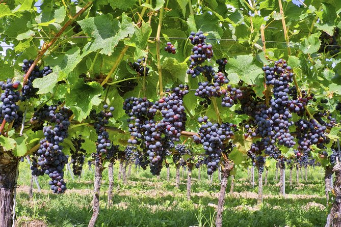 Private Irpinia Wine Tour with Sommelier from Naples