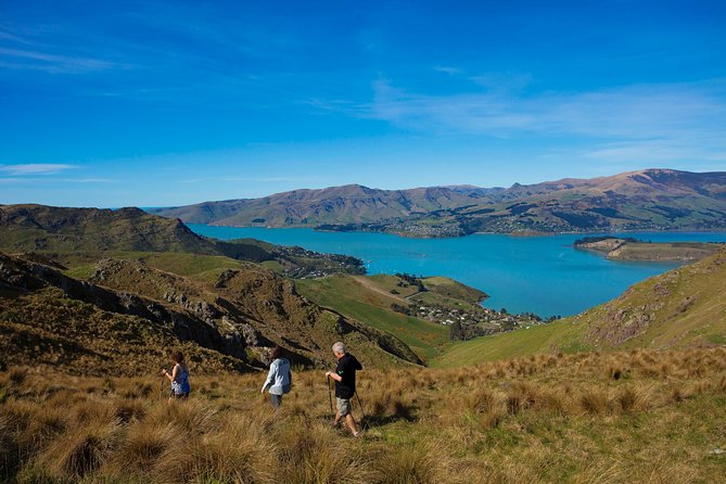 1-Day Guided Walking Tour and Picnic on Banks Peninsula