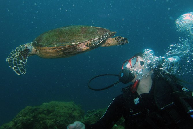 Scuba diving experience in Buzios