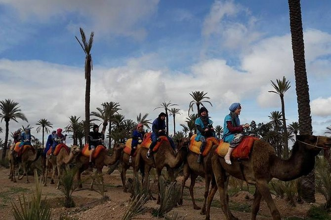 Camel Ride in oasis with Hammam and massage