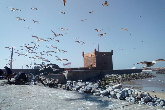 Day Trip and Excursion to Essaouira