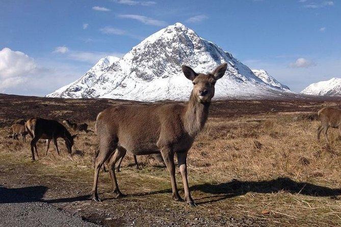 Excursão a Glencoe, Lago Ness e Terras Altas saindo de Edimburgo