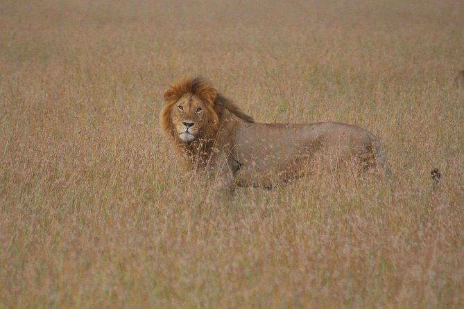 15 Day Rustic Kenya Wildlife And Beach Safari