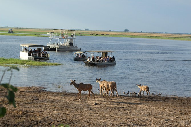 Full Day Game drive or Boat Cruise in the Chobe National Park River Front