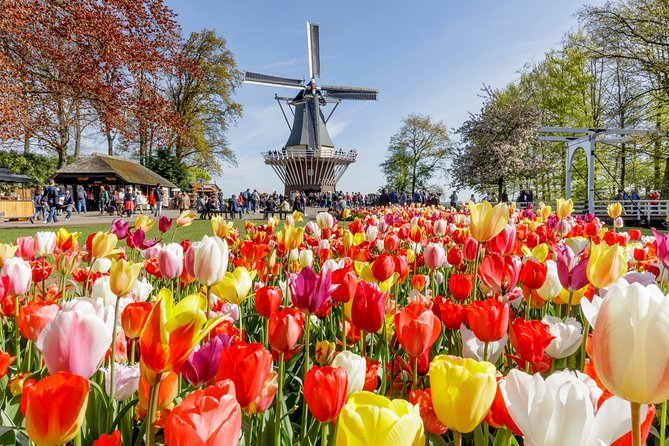 Guided Half-Day Trip from Amsterdam to the Keukenhof gardens + Flower Fields