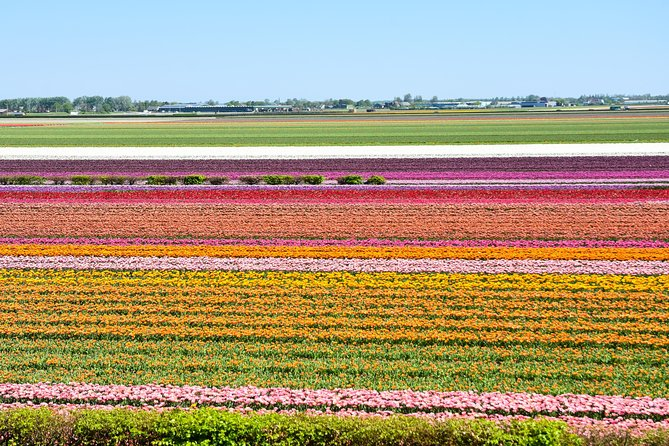 Keukenhof, Flower Fields, Volendam and Zaanse Schans Small Group Tour