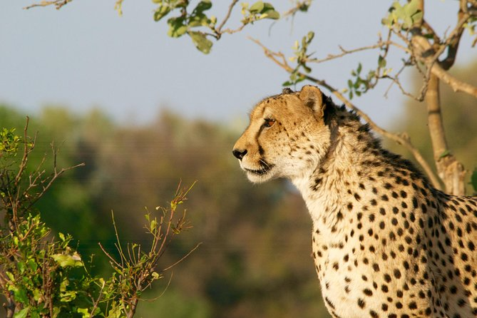 3-day Cradle of Human Kind, Sun City and Pilanesberg Big 5 Tour