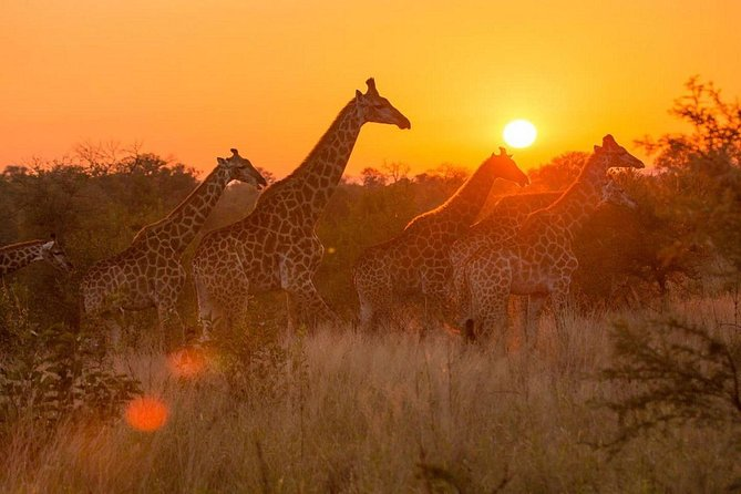 4-day Soweto & Pretoria, Lion Park, Magalies Adventure or Pilanesberg Safari