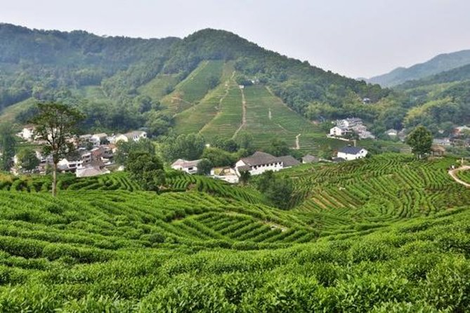 Hangzhou Day Tour of West Lake, Lingyin Temple, Tea Village & Hefang Street