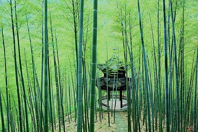 Two Days Mogan Mountain & Anji Bamboo Forest Family Fun And Leisure Tour