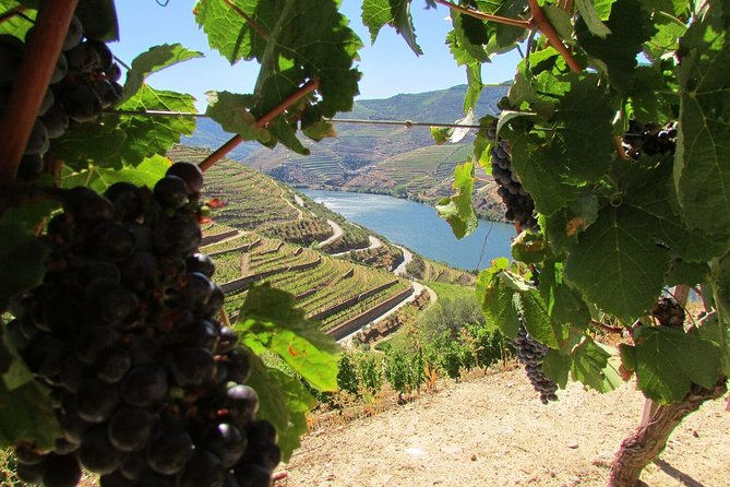 Douro Valley Tour - Wineries & Wine Tastings, River Cruise and Lunch!