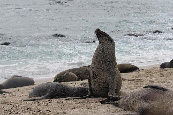 Galapagos Surprising 4 Days