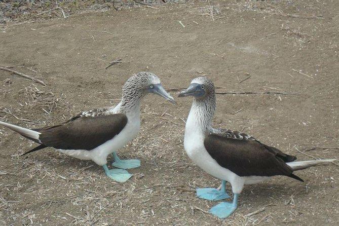 Galapagos Enchanting (5 Days)