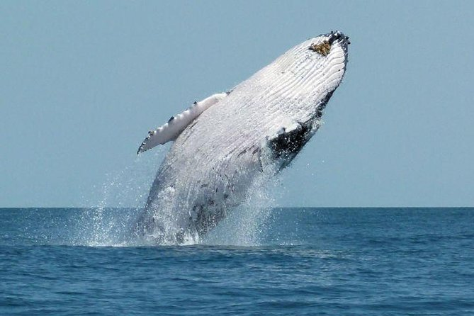 Whale Watching Day Trip From Punta Cana photo 2