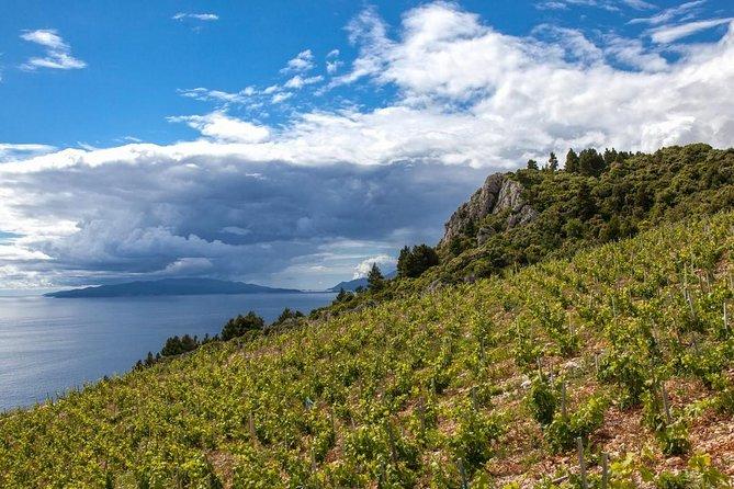 Smiley wine tasting on peninsula Peljesac