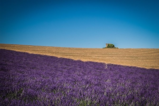 Lavenders in Valensole Private Half-Day Tour from Marseille