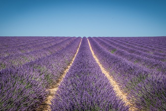 Lavenders in Valensole Small Group Half Day Tour from Aix-en-Provence