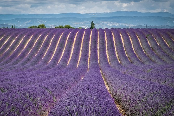 Lavenders in Valensole & Verdon Small Group Tour from Aix en Provence
