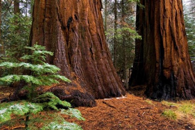 Come see the land of Big Trees!