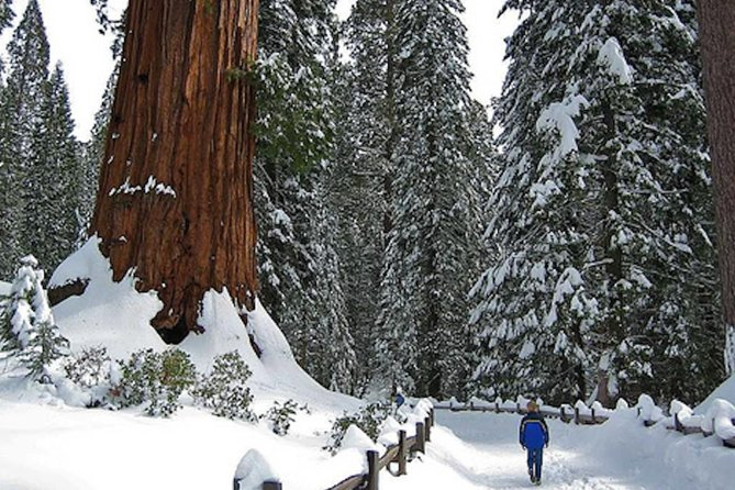 Private Giant Sequoia Grove Hike or Snowshoe