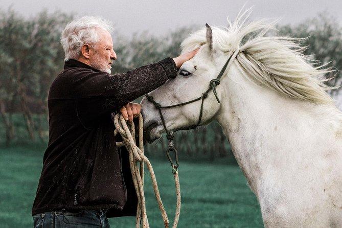 Introducción al caballo islandés - Horse Show