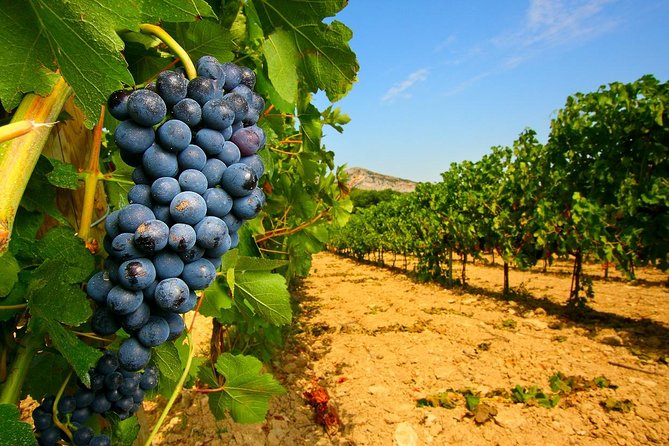 Half Day Great Vineyard Tour from Avignon