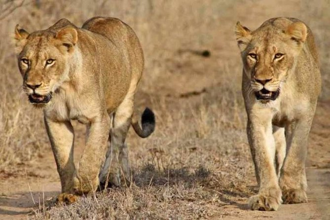 5 Days Botswana Delta & Central Kalahari Safari (Accommodated)