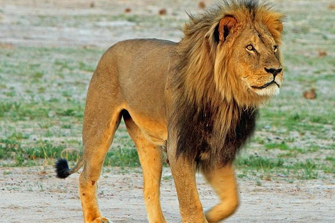 14 Days Wonderful Safari in Namibia, Botswana, and Zimbabwe (Camping and Lodging)