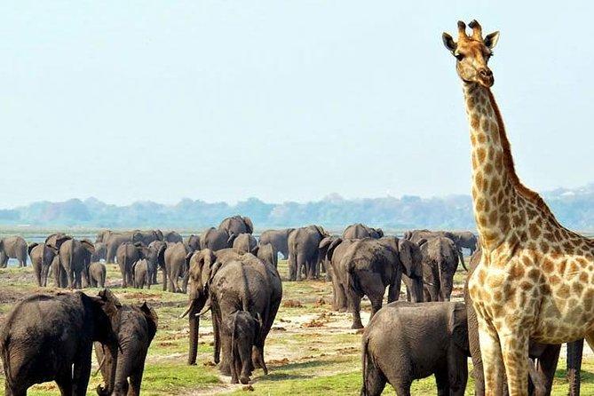 2 Days Etosha wildlife Safari-Namibia (Kamperen)
