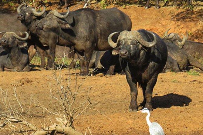 11 Days Botswana Northern Experience (Accommodated)