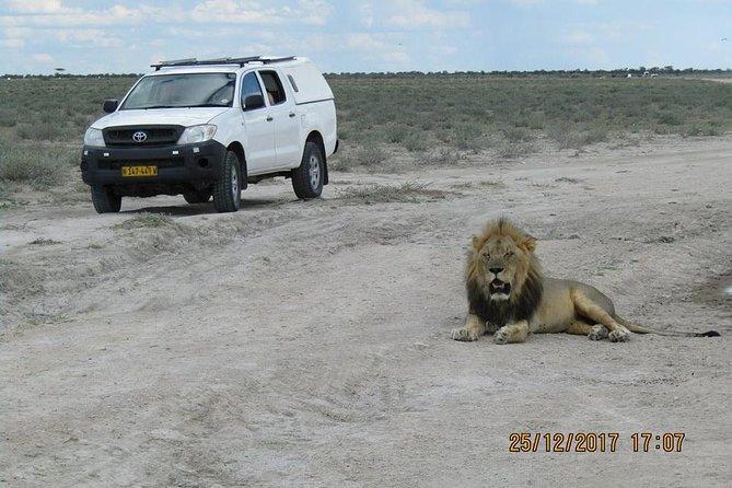 Windhoek-Etosha Park ( Okaukuejo, Toshari Inn, Ongava lodges) or vice versa Transfer (Namibia)