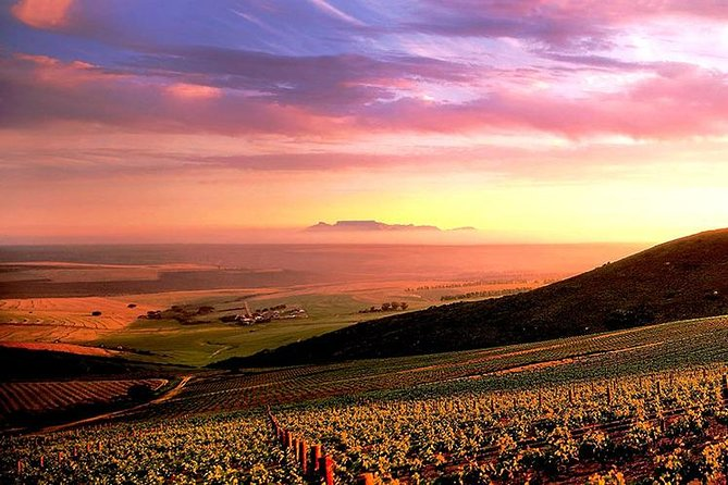 Cape Town: Beer & Wine Foodie Adventure Tour to Darling