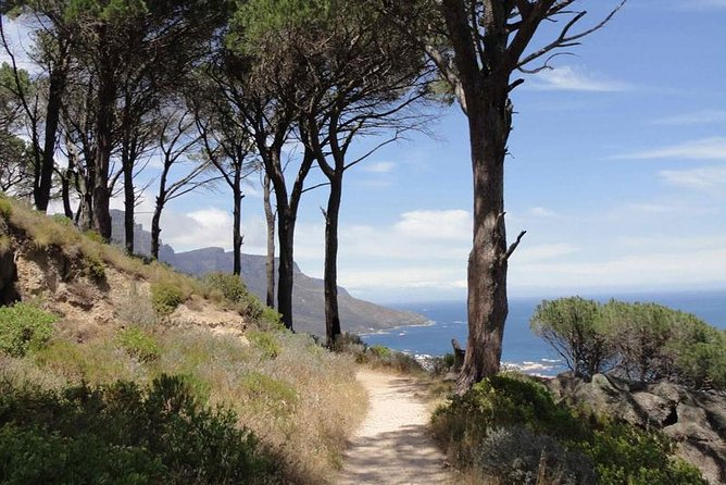 Cape Town: Table Mountain Gentle Guide Meander for the Whole Family.