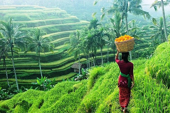 Bali Tours Sightseeing & Ubud Monkey Forest