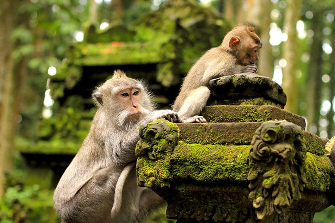 Ubud: Monkey Forest, Rice Terrace & Tanah Lot Tour